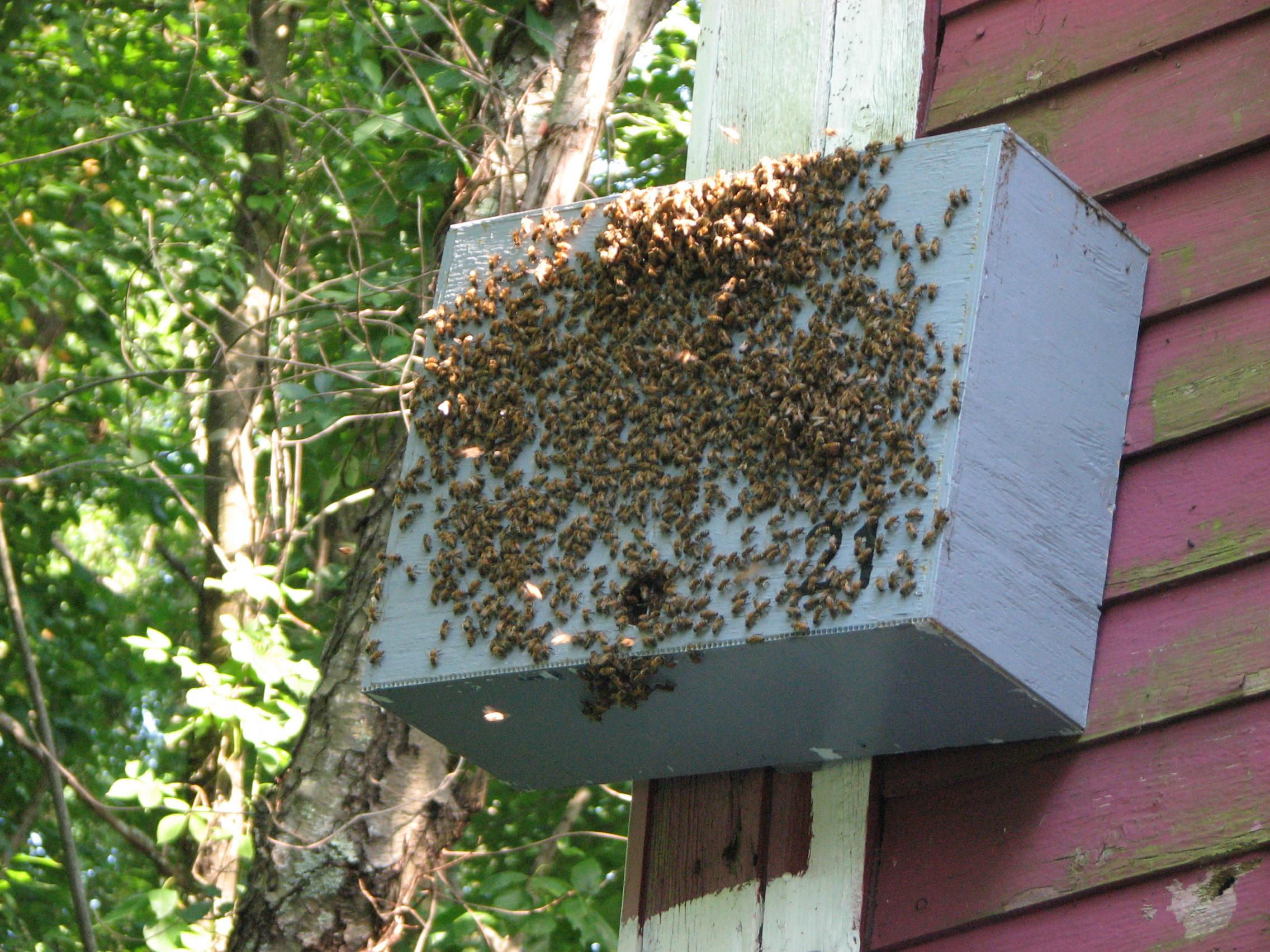 Tubetrap Swarm Trap 5