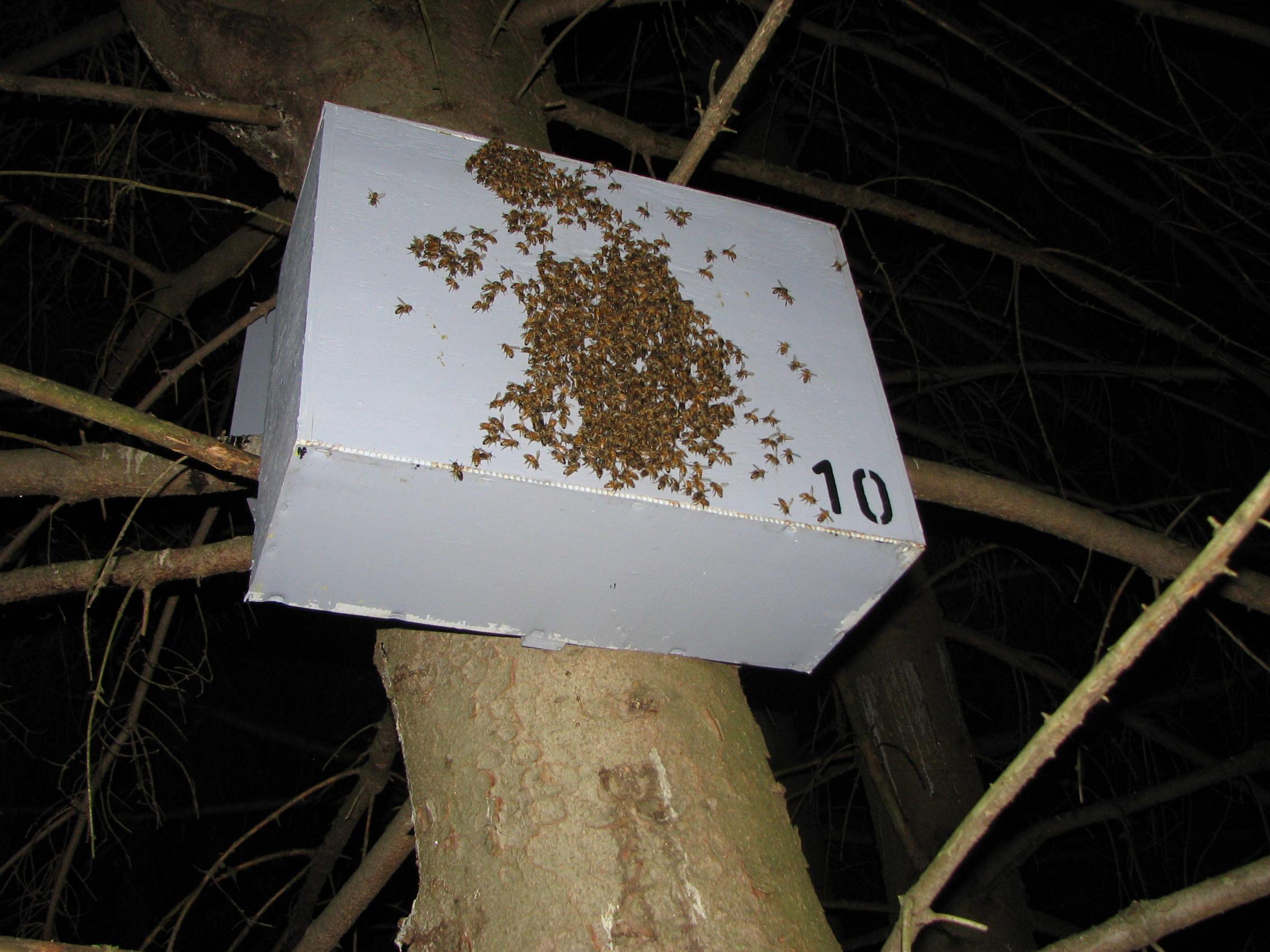Bushkill Honeybee Swarm Traps