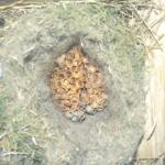 cavity nest